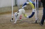 KC and Felicia Wynn getting their very first Q in CPE Agility at the Periland trial. Photo credit HereforDogs